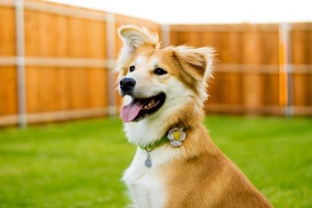 Pet Owner's Liability Insurance